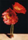花朵创意0010,花朵创意,广告创意,鲜红的花