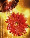 花朵创意0014,花朵创意,广告创意,浇水 水壶 雏菊