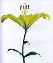 花朵创意0020,花朵创意,广告创意,花蕊竖起