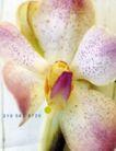 花朵创意0021,花朵创意,广告创意,鲜嫩的花儿