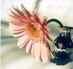 花朵创意0022,花朵创意,广告创意,娇嫩的雏菊
