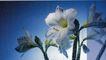 花朵创意0027,花朵创意,广告创意,白色的花