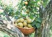水果世界0149,水果世界,美食,