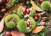 水果世界0154,水果世界,美食,板栗