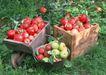 水果世界0156,水果世界,美食,