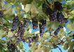 水果世界0164,水果世界,美食,