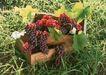 水果世界0168,水果世界,美食,