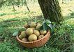 水果世界0169,水果世界,美食,