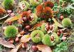 水果世界0173,水果世界,美食,果子 野果