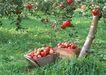 水果世界0174,水果世界,美食,