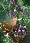 水果世界0183,水果世界,美食,葡萄园 丰收