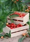水果世界0188,水果世界,美食,木箱