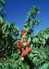 水果世界0192,水果世界,美食,