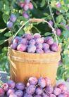 水果世界0194,水果世界,美食,