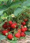 水果世界0195,水果世界,美食,
