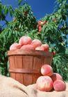 水果世界0197,水果世界,美食,