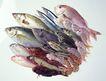 生鲜鱼肉菜0024,生鲜鱼肉菜,美食,海鲜鱼