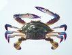 生鲜鱼肉菜0025,生鲜鱼肉菜,美食,螃蟹