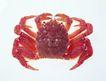生鲜鱼肉菜0030,生鲜鱼肉菜,美食,螃蟹特写