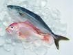 生鲜鱼肉菜0059,生鲜鱼肉菜,美食,