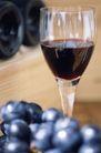 葡萄酒篇0016,葡萄酒篇,美食,