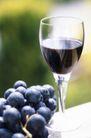 葡萄酒篇0019,葡萄酒篇,美食,鲜葡萄