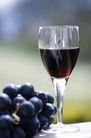 葡萄酒篇0023,葡萄酒篇,美食,葡萄酒