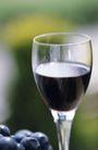 葡萄酒篇0024,葡萄酒篇,美食,一杯葡萄酒