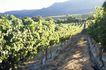 葡萄酒篇0034,葡萄酒篇,美食,果树 阳光 种植