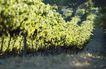 葡萄酒篇0036,葡萄酒篇,美食,绿色 果园 草地