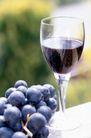 葡萄酒篇0046,葡萄酒篇,美食,