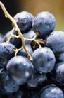 葡萄酒篇0047,葡萄酒篇,美食,