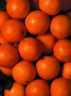 食品背景0057,食品背景,美食,橙子