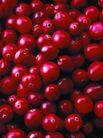 食品背景0066,食品背景,美食,红果子