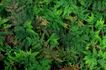 叶脉分明0151,叶脉分明,植物,青叶