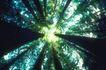 叶脉分明0154,叶脉分明,植物,仰拍大树