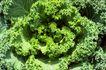叶脉分明0156,叶脉分明,植物,青菜