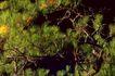 叶脉分明0161,叶脉分明,植物,
