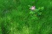 叶脉分明0165,叶脉分明,植物,