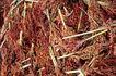 叶脉分明0169,叶脉分明,植物,