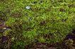 叶脉分明0173,叶脉分明,植物,