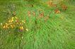 叶脉分明0179,叶脉分明,植物,