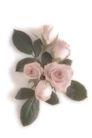 叶脉分明0188,叶脉分明,植物,鲜花