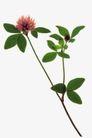 叶脉分明0190,叶脉分明,植物,植物开花