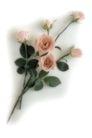 叶脉分明0192,叶脉分明,植物,花枝