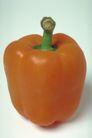 叶脉分明0193,叶脉分明,植物,辣椒