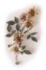 叶脉分明0194,叶脉分明,植物,娇美的花儿