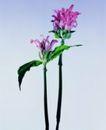 百花争艳0093,百花争艳,植物,绿叶 鲜花 花枝