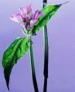 百花争艳0094,百花争艳,植物,叶形 颜色 花梗