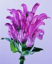 百花争艳0095,百花争艳,植物,花瓣 洋式色